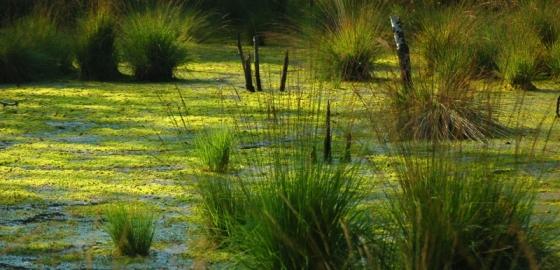 Кондакопшинское болото